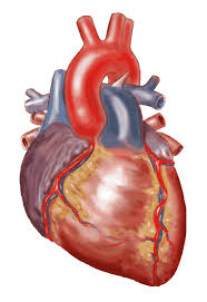 Fully activated islamic blog chapter 3body parts which man increases in rank by cleaning and purifying the heartfor only pure hearts are ccuart Images