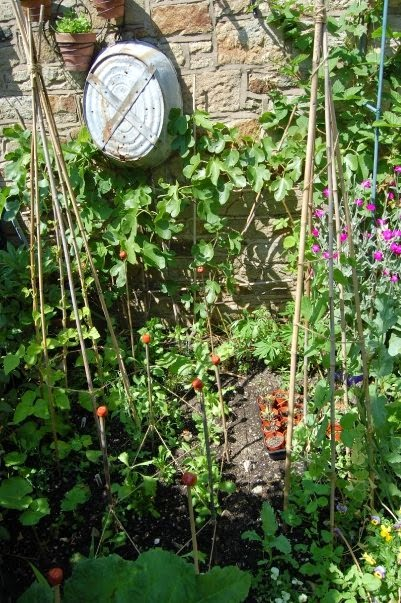 Grow vertical = think clever = higher harvests #lifeonpigrow