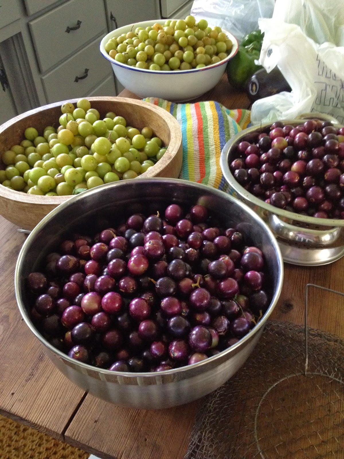 scuppernong grapes how to eat