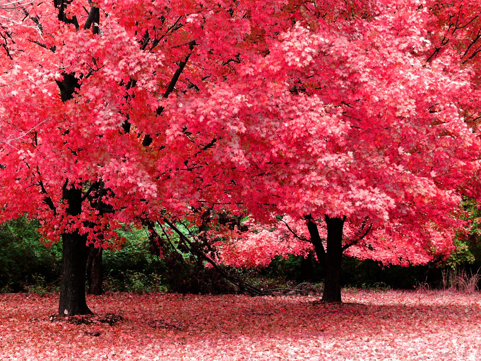 ws Pink trees 1600x1200 ws Pink and white trees 1600x1200 hd wallpapers indian global tamil sex in tress sexy roads nude girls arabic sexy girls in trees high quality wallpapers pink rose white black red r Click Here to Watch Full HD Video