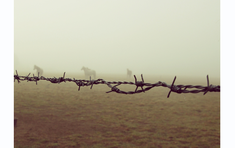 jument dans le brouillard