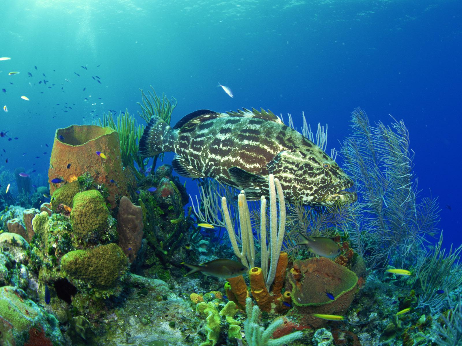 gambar ikan di laut - gambar ikan - gambar ikan di laut