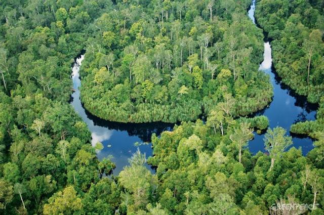 ICCC Kembangkan Pengukuran Emisi dari Lahan Gambut