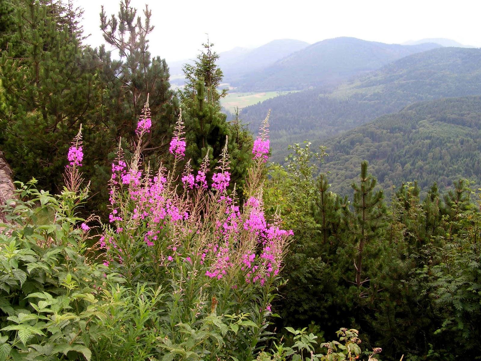 Фотографии Auvergne (Регион Овернь) достопримечательности, города, парк вулканов, путеводитель