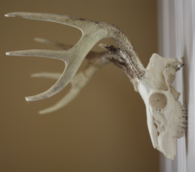 17 Apart How To Clean And Wall Mount Deer Antlers