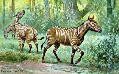 caballos del mioceno Hypohippus