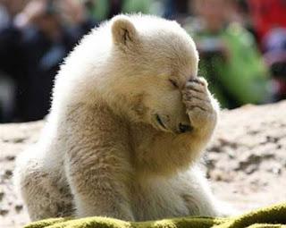 Foto Beruang Galau