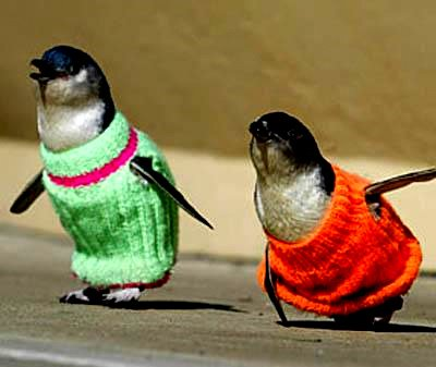 What Well Dressed Penguins Are Wearing