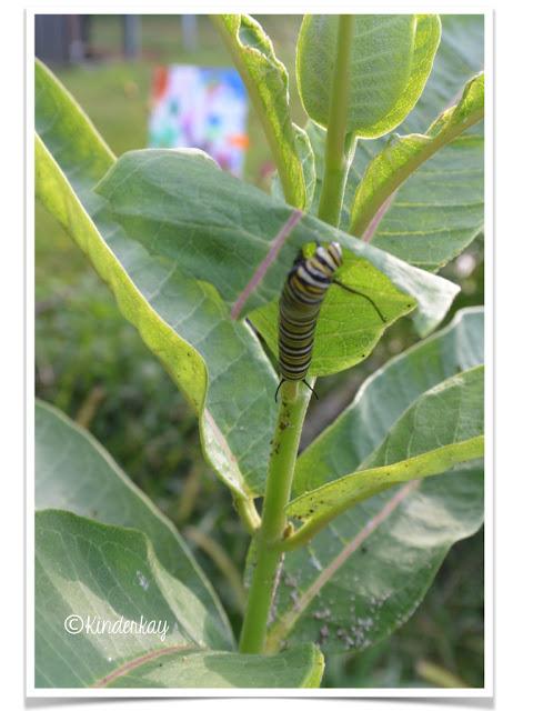 https://www.teacherspayteachers.com/Product/Butterflies-and-Caterpillars-Lets-Make-a-Book-Science-Packet-233543