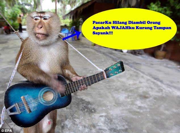 monyet lucu galau