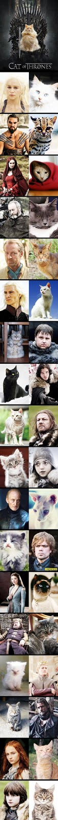 cool-funny-cat-game-thrones-characters