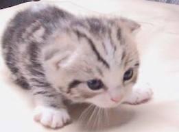 Anak kucing yang cantik lucu dan imut