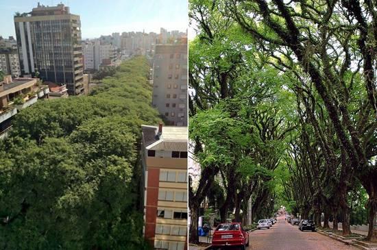 http://4.bp.blogspot.com/-OGFAXeXnqz0/ULniiwS8yfI/AAAAAAAA6ag/huVJU69vqXM/s1600/Top-10-Tree-Tunnel-002.jpg