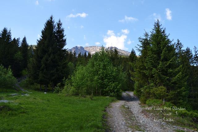 pietrosul-rodnei-peak-hike-road