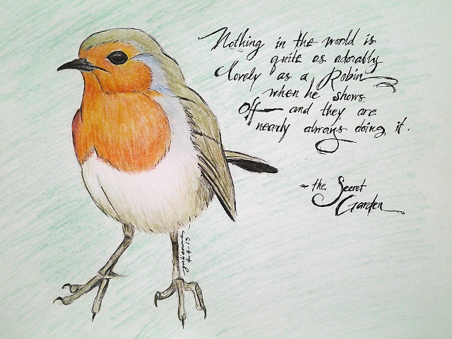 Robin in color pencils by julienne m.