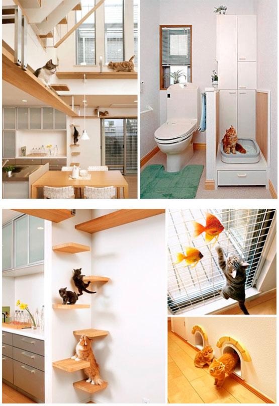 Casa gato house cat