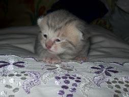 fripouille,fille de tigrou et grisouille /12 jours