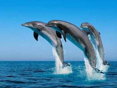 delfines saltando del agua Imagenes y Fotos de delfines...