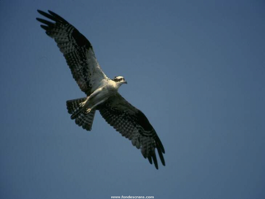 http://4.bp.blogspot.com/-OHIFjwKQs3k/TrFA2yHParI/AAAAAAAACtQ/jFsrkozA_SU/s1600/Wallpapers+27-9-Eagles.jpg