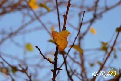 Gult höstlöv på trädgren. foto: Reb Dutius