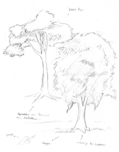 Study Pohon