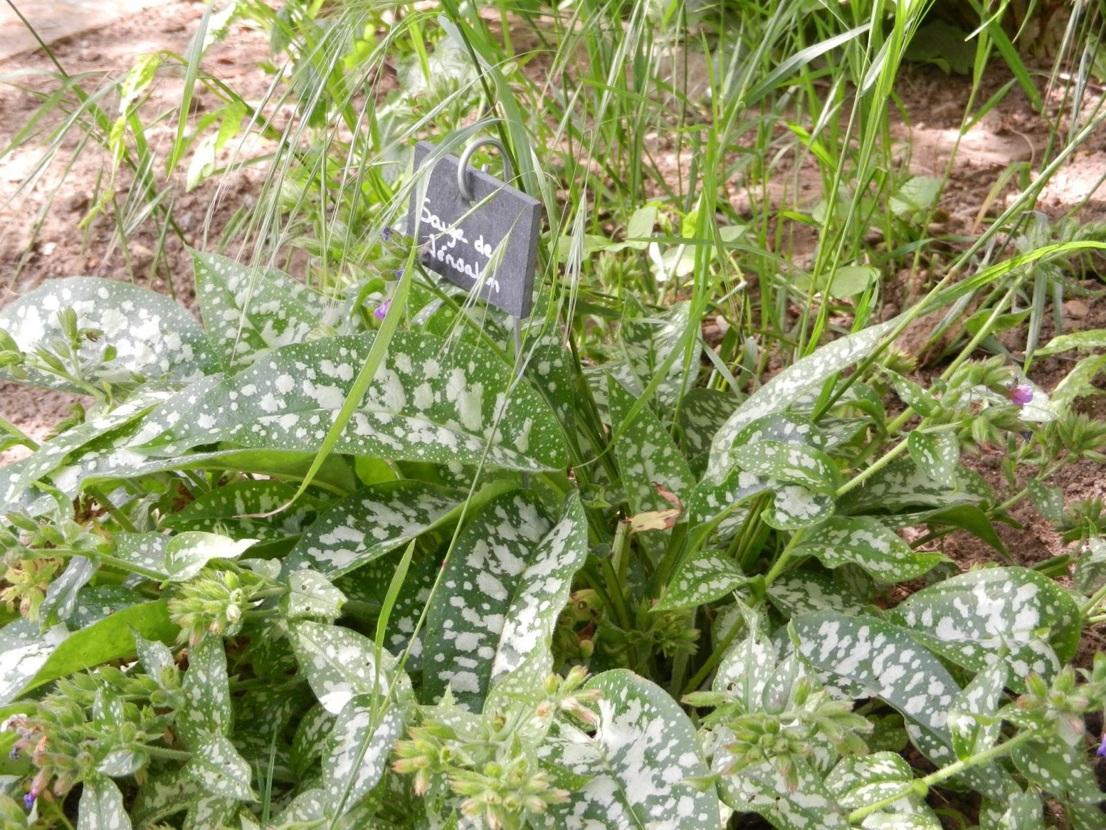 Jardin d 39 esprit m di val du lyc e agricole de douai wagnonville rendez vous aux jardins 2013 for Jardin hildegarde
