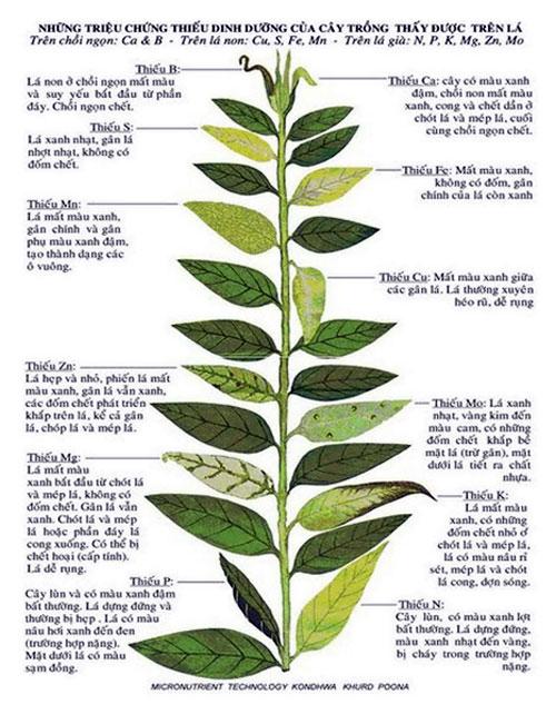 Nhu cầu dinh dưỡng của cây và phân bón