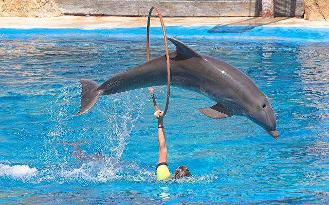 Foto dolfijn in zwembad