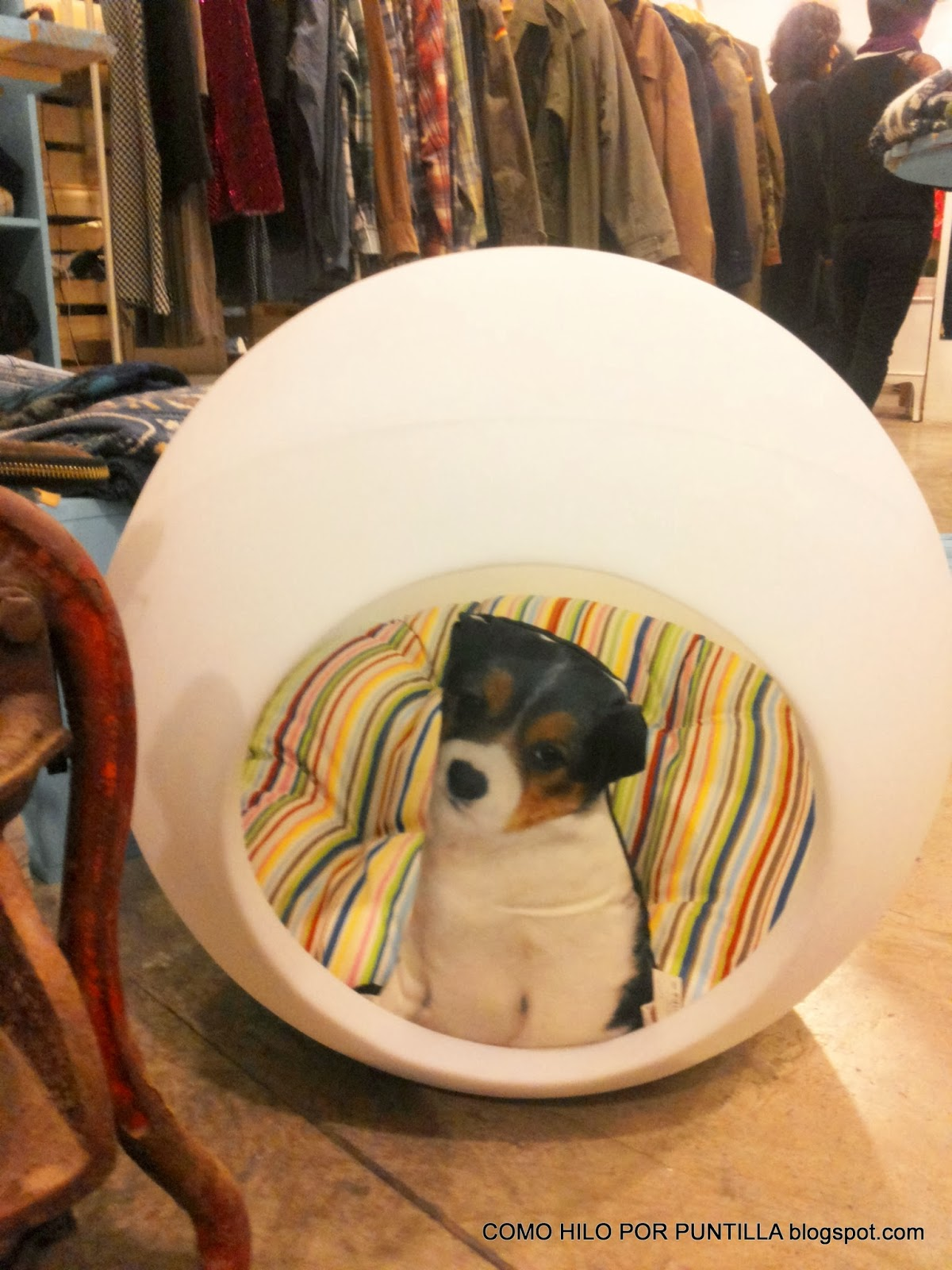 cute-puppy-Place-Valencia-what-to-wear