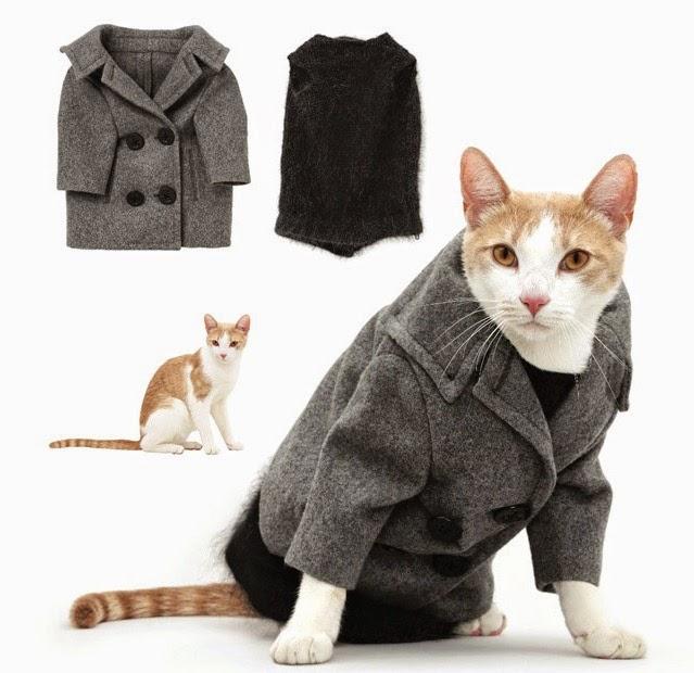 Jual Baju Untuk Kucing Newhairstylesformen2014 Com