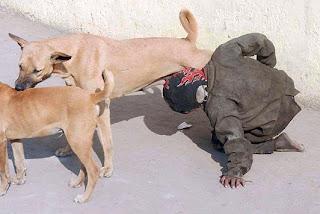 main dengan anjing