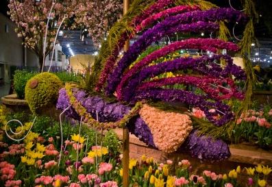 Flower Show Stills