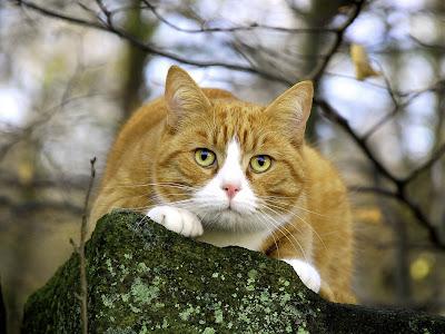 صور قطط 2014 , اجمل صور قطط جميلة , Photos Cats 2014