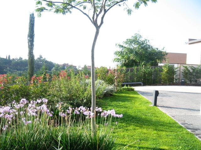 Jardinitis jard n mediterr neo en el maresme - Disenador de jardines ...