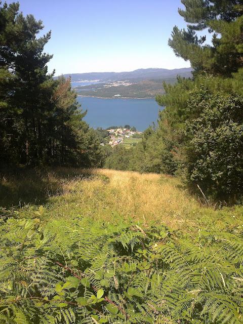 La ría desde el cortafuegos en el monte San Lois Noia