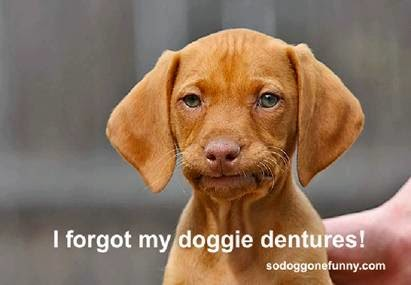 "Cut dog meme ""I forgot my doggies dentures!"""