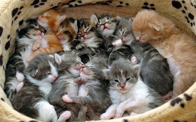 много ктоят спят
