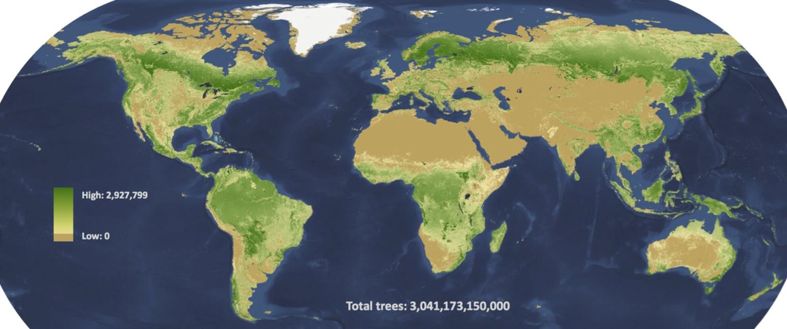 Количество деревьев на планете