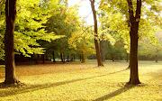 Bello wallpaper de un campo en otoño bello wallpaper de un campo en otoã±o
