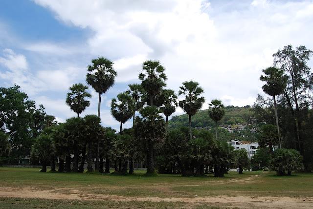 Пальмы на пляже Сурин, Пхукет. Palms at Surin Beach, Phuket.