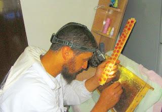 وزارة الزراعة العمانية تطلق مشروعاً لإنتاج عذارى ملكات النحل