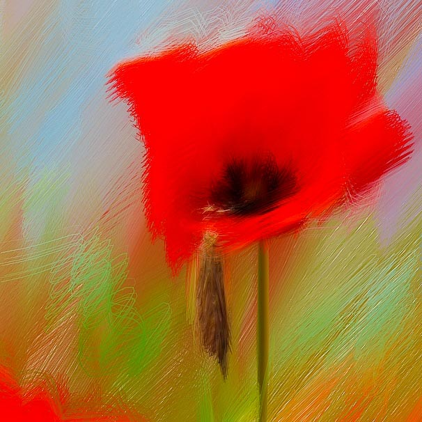 Bentley ash fine art poppy painting for sale for Fine art paintings for sale online