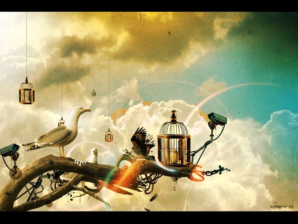 http://4.bp.blogspot.com/-OK8DtIa9gbs/ThxuE7ZuOqI/AAAAAAAACJ0/RLLWaeYTN2w/s1600/1234513032_1024x768_cool-3d-birds-wallpaper.jpg
