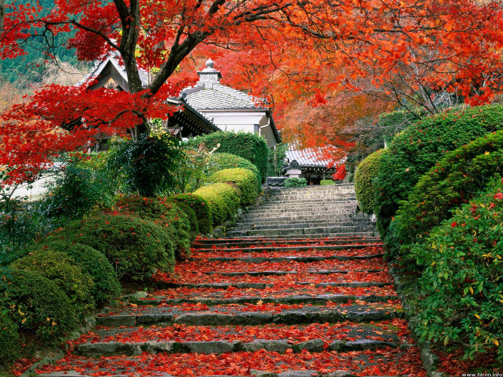 Awesome Natural Japanese Garden