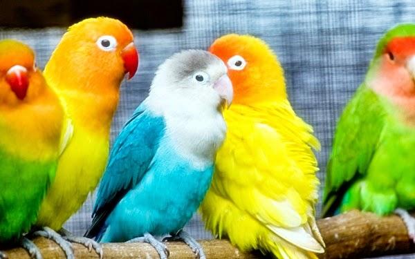 june 2014 tips merawat burung dan harga burung