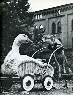 Classic Humorous Photos from Life Magazine Seen On www.coolpicturegallery.us