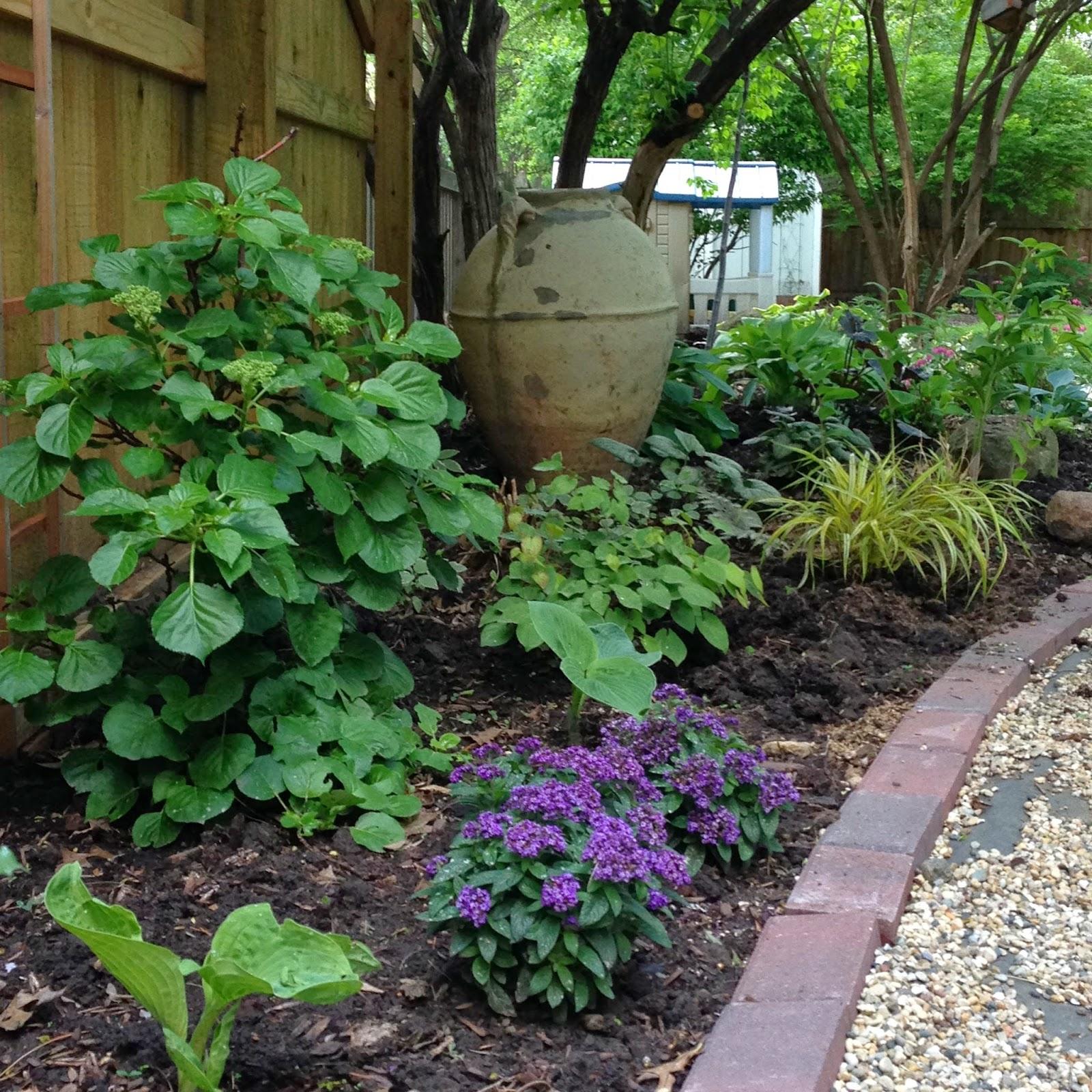 Our Kitchen Garden My Garden Diaries May 2014