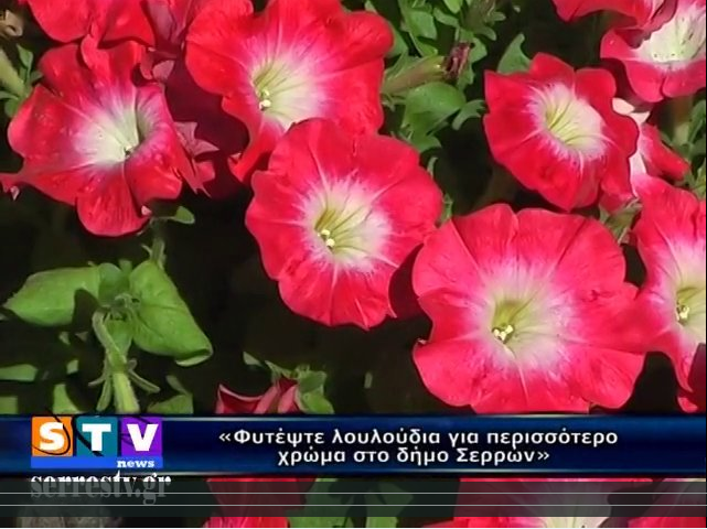 Φυτέψτε λουλούδια