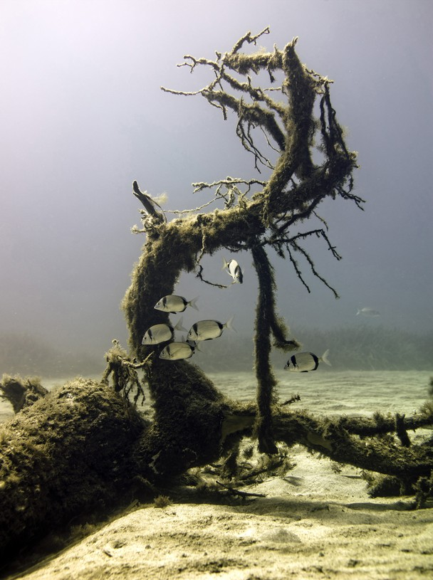 The underwater tree - National Geographic Photo Contest 2011