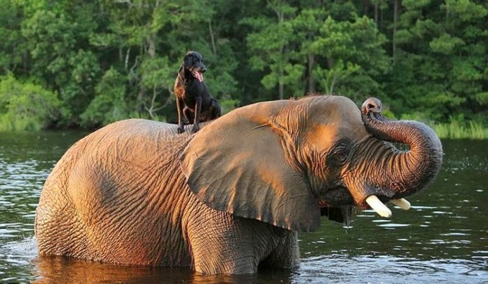 Elephant and Dog Are Best Friends
